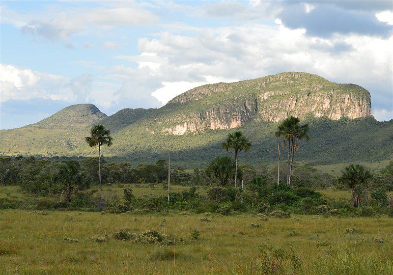 campo palmeiras e grande complexo de montanhas ao fundo