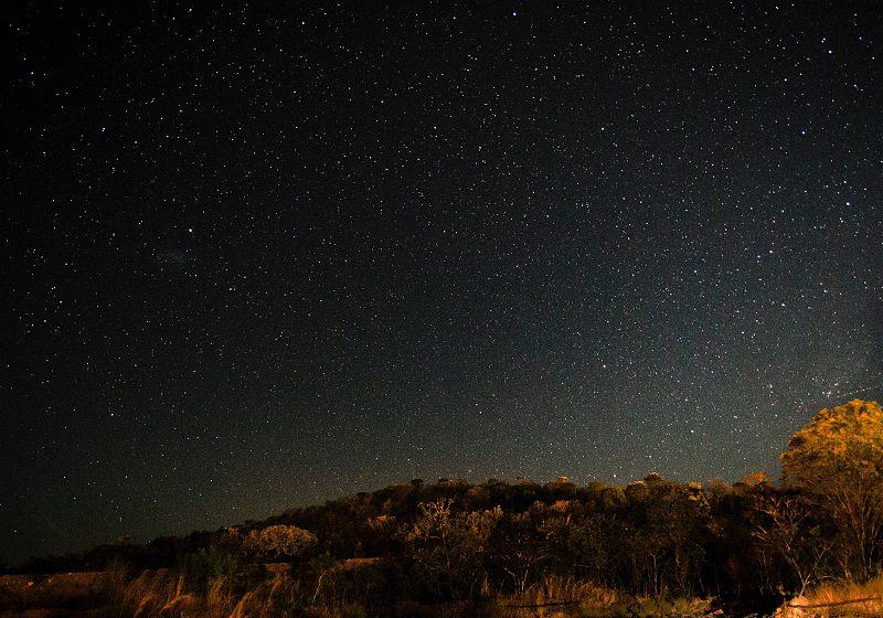 floresta com céu noturno estrelado