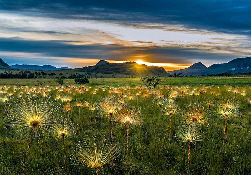 jardim de flores mayrea com montanhas ao fundo e pôr do sol